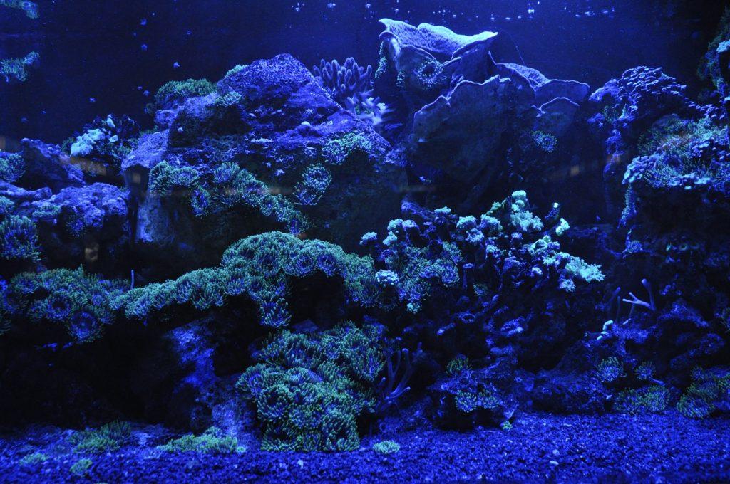 coraux durs